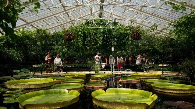 royal-botanic-gardens-kew-giant-lily-pads-in-kews-waterlily-house-ea6f3b8d055d303ff6ba1d7c105d423d